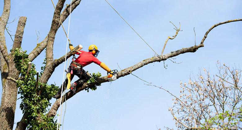 Tree limb removal Orlando FL
